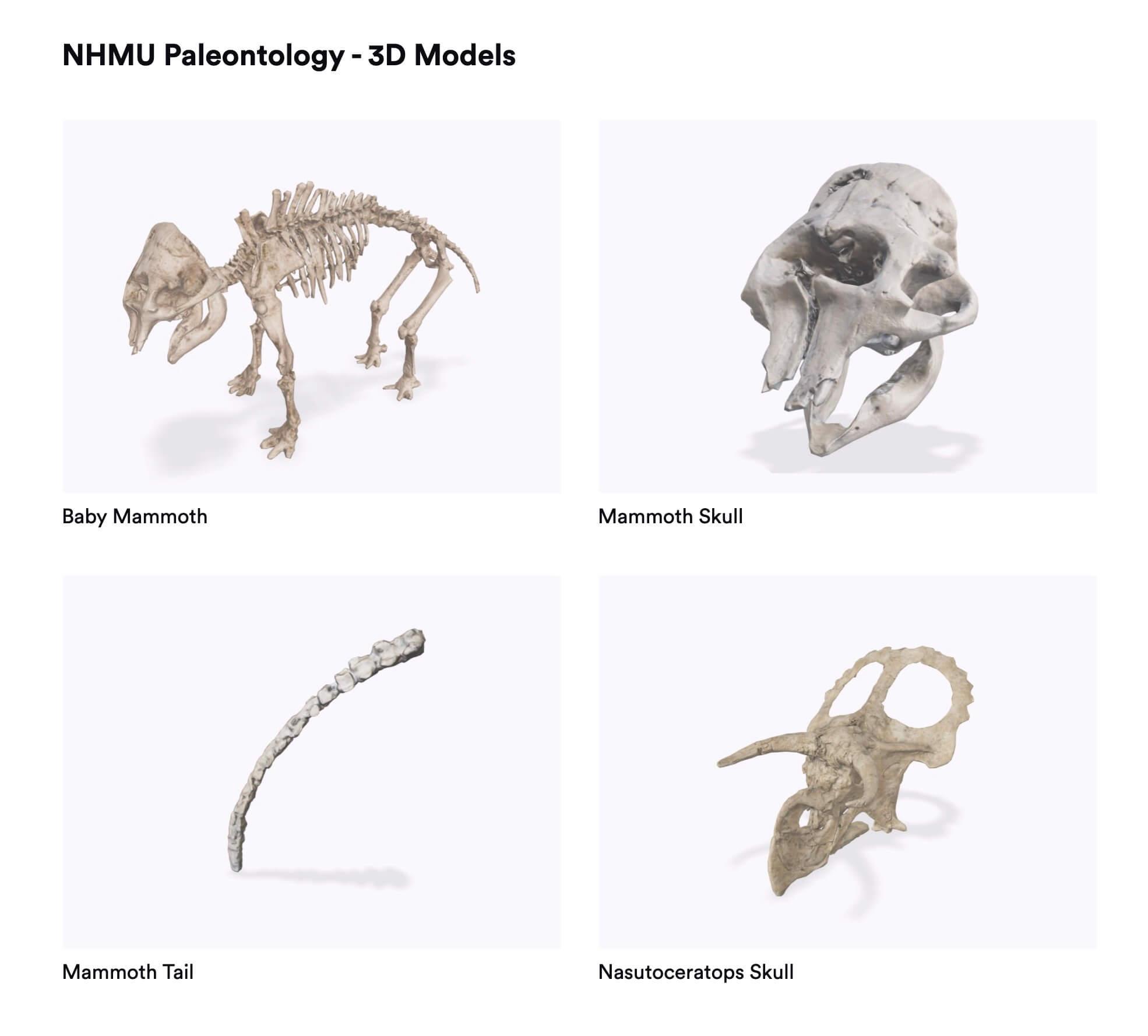 NHMU Fossiles en AR